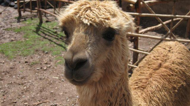 Peru 2009 273