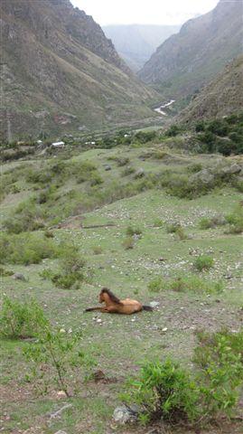 Peru 2009 342