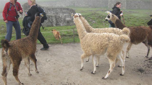 Peru 2009 407