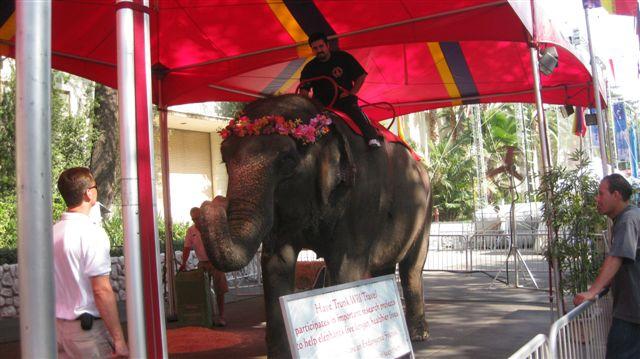 Elephants Gerald