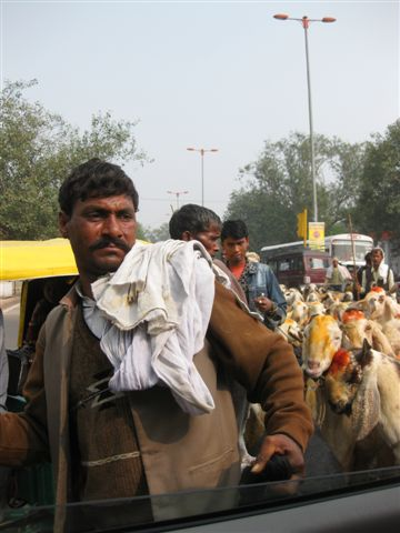 Goat Peddlers wading through traffic