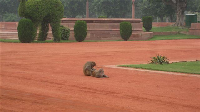 Monkeys picking their butts on the President's lawn! Show some respect!