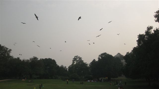 Why are there so many birds in India?? The pollution must contain bird seed extract!