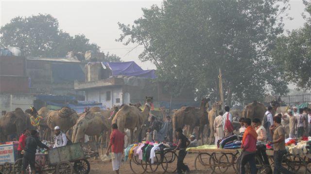 India 2010 095camels