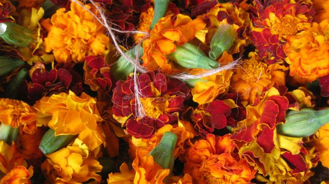 Marigolds. The National Flower of India...maybe.