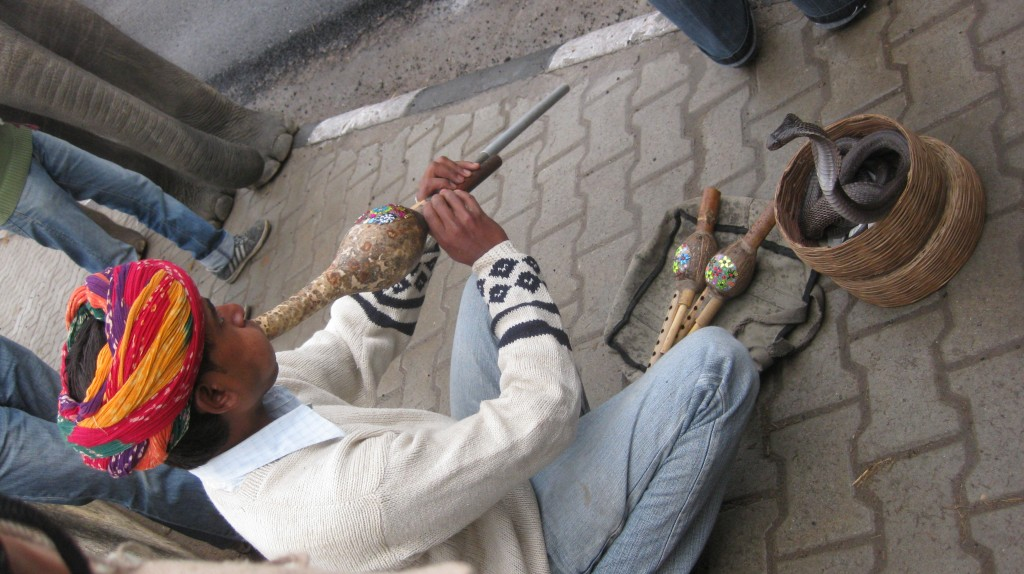 Snake Charmer! The snake is hypnotized by the vibrations. And the poor thing's teeth have been removed. Call PETA!