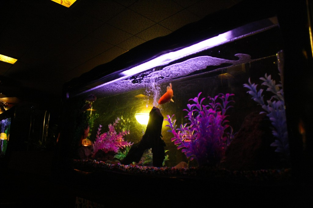 Aquariums in restaurants are, sadly, a thing of the past.